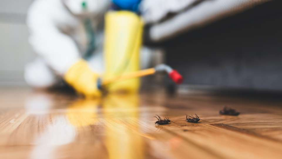 Pest / Insect control